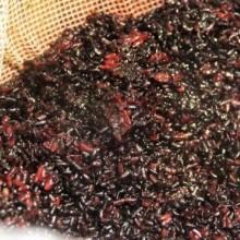 heygirl黑米饭团